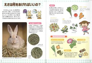 はじめての飼育ウサギ_本編.jpg