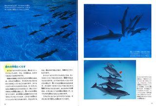 イルカ中面.jpg