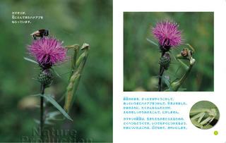 1_カマキリ2.jpg