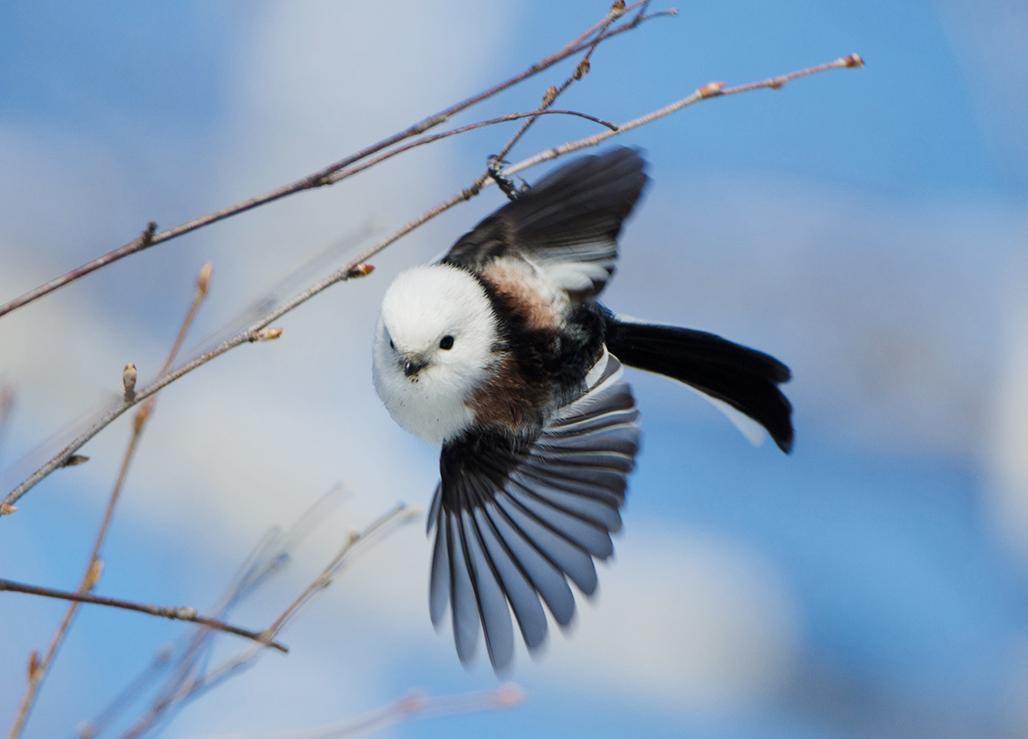 飛ん で いる 鳥