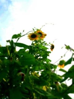 PhotoHenshu_20130815170136.jpg