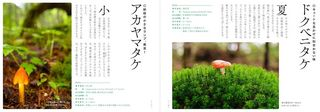 blog_photo_2.jpg